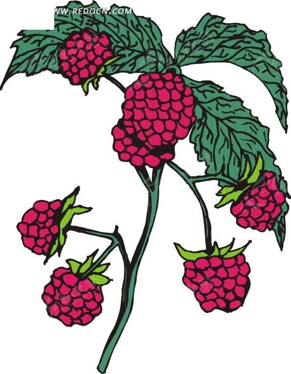 手绘红色树莓