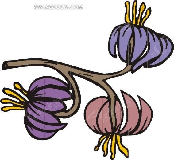 手绘树枝上灯笼状的花朵