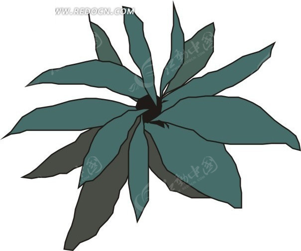 手绘灰色和墨绿色叶子的植物