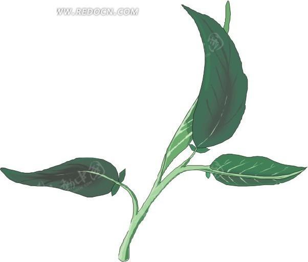 手绘绿色叶子和叶茎