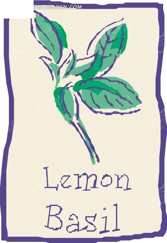 手绘柠檬罗勒