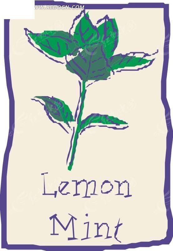 手绘柠檬薄荷