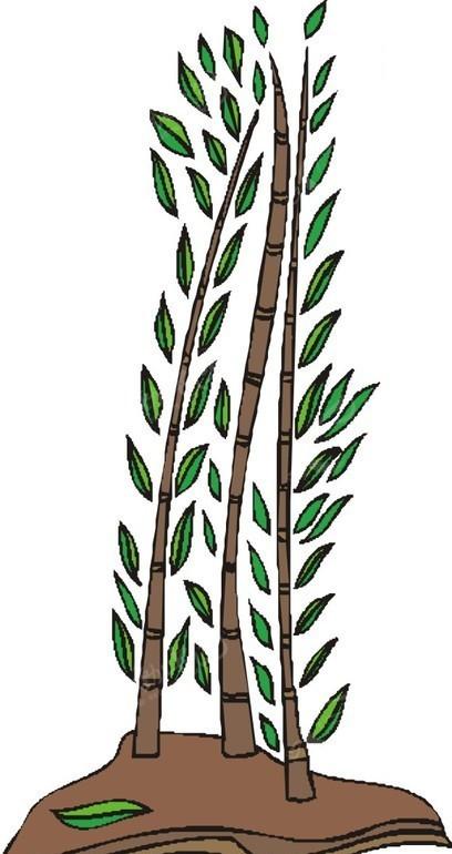 竹子手绘插画边框