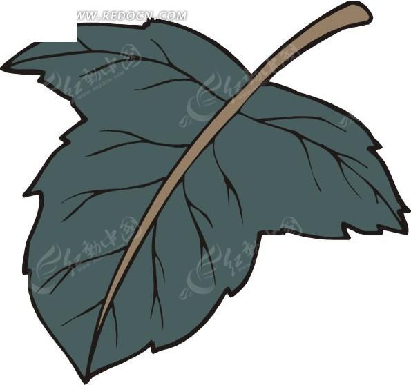 手绘棕色叶脉的墨绿色叶子