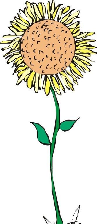 一朵向日葵卡通画