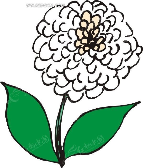 盛开的花朵 白色花朵 绿叶 叶子 卡通画 插画 手绘 矢量素材