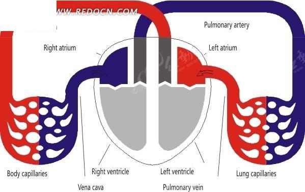 多级神经元结构示意图_人体器官_红动手机版