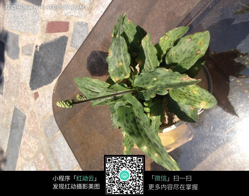 绿色热带植物图片