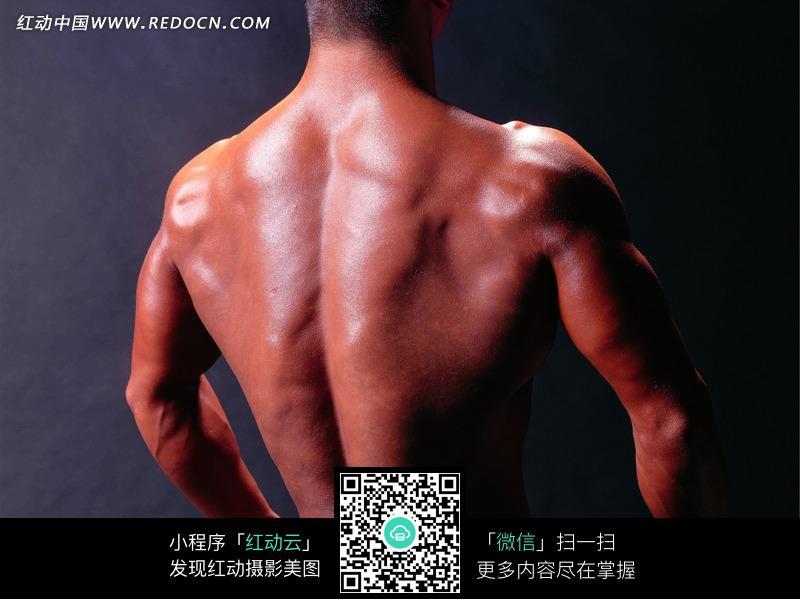 肌肉 男性 背部/健美先生的背部肌肉特写图片...