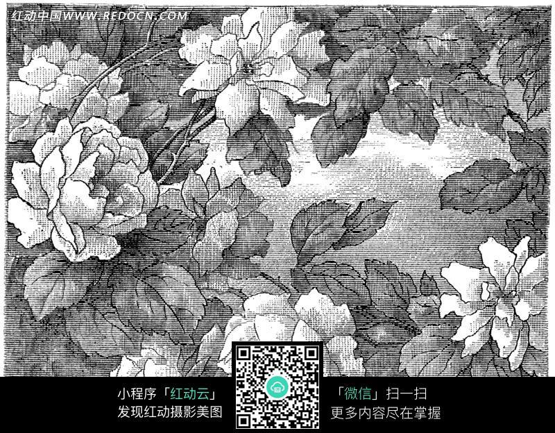 手绘白色玫瑰花