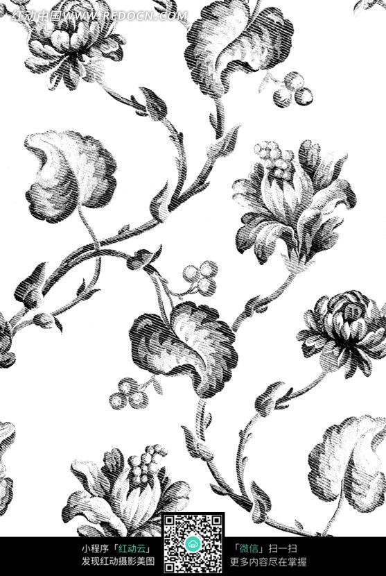 精美素描图片 精美花朵树枝图片 精美 素描  卷曲的树藤 精美花朵