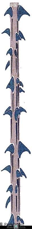 手绘藤蔓上的钩刺图片