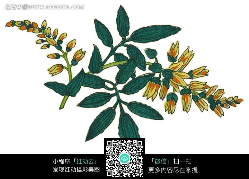一枝小黄花绿叶植物图片