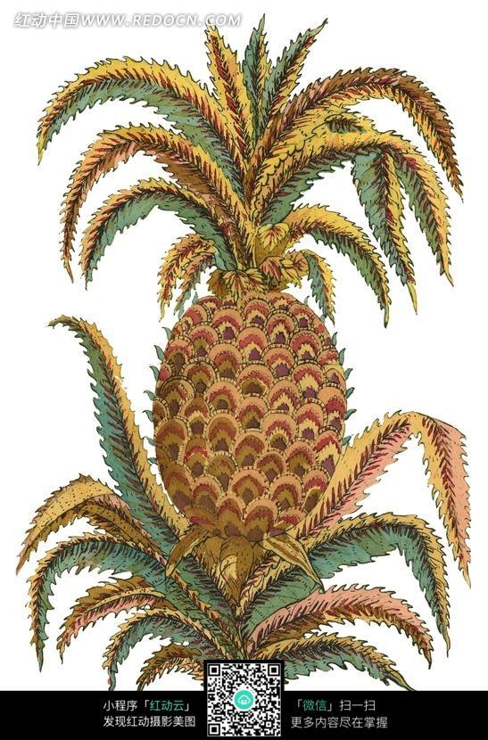 手绘锯齿叶蔓上菠萝