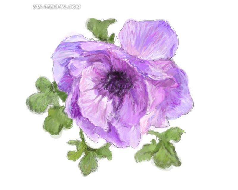 手绘紫色调虞美人花