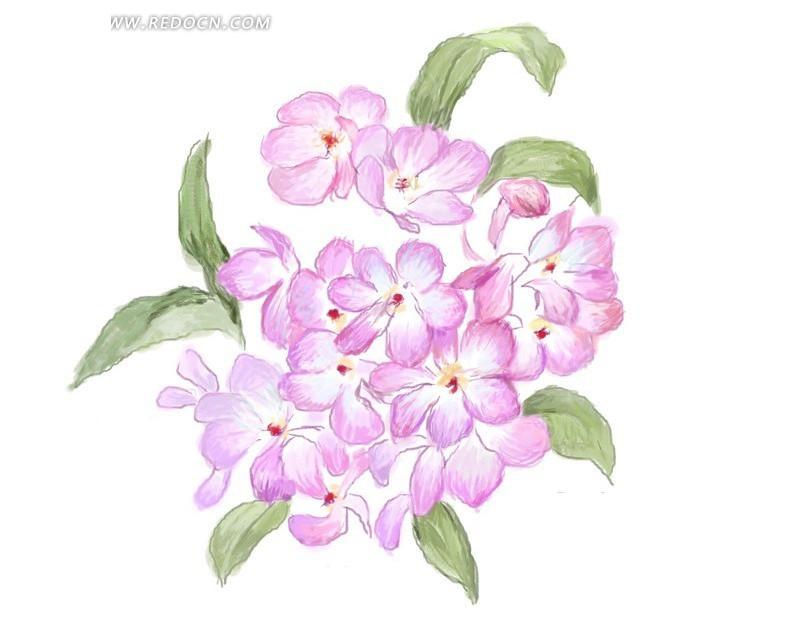 手绘粉红色调绣球花_花纹花边