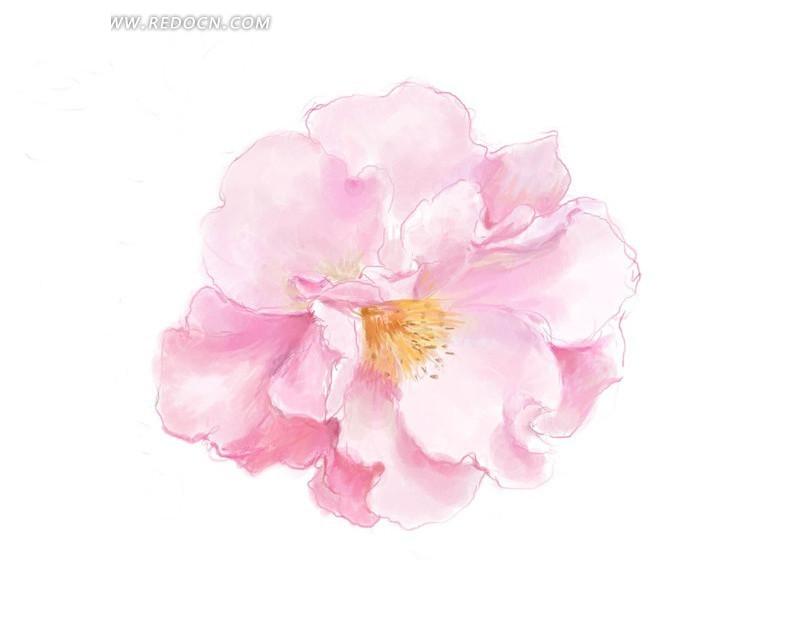 手绘粉红色蔷薇花