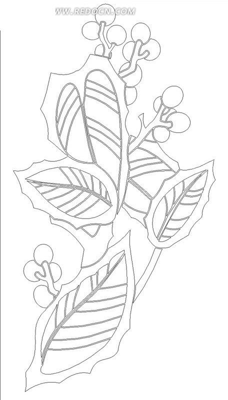 叶子和结果子的植物线描图
