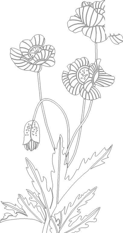 素描镂空花朵边框图片图片_素描镂空花朵边框图片大全; 植物花卉素描
