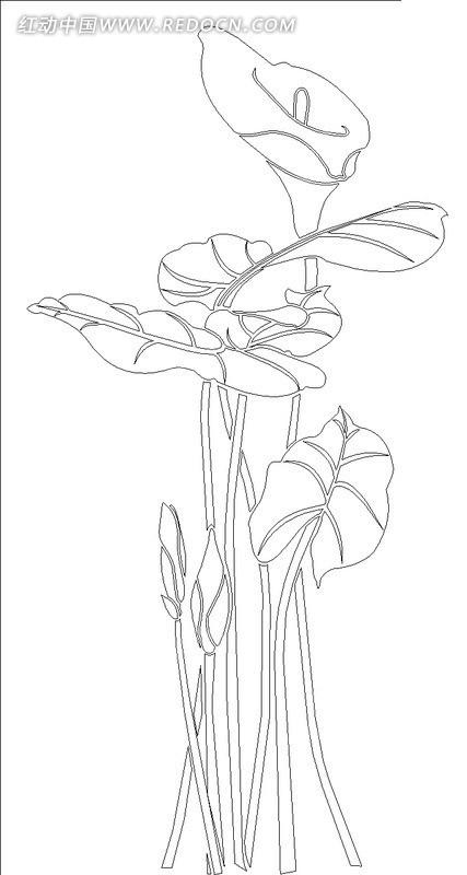 马蹄莲线稿设计模版
