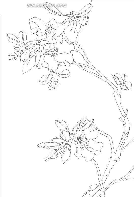 花朵盛开枝干弯曲的植物线描图矢量图_其他