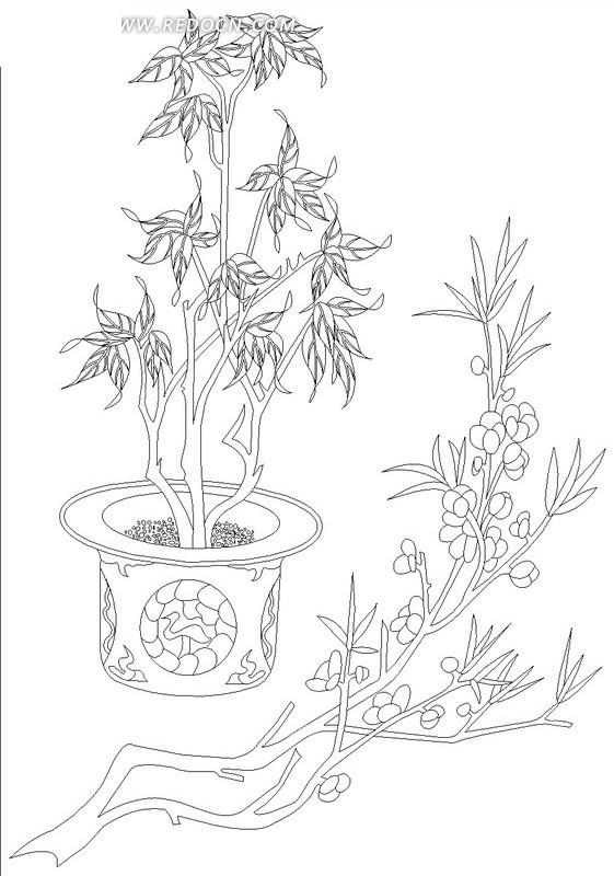盆栽边开花的植物线描图