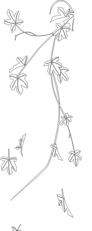 手绘线条枫叶枝叶