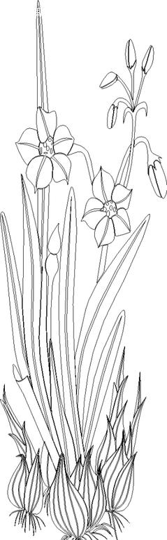 幼儿黑白线描边框