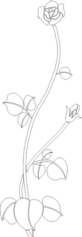 修长玫瑰花黑白线描稿