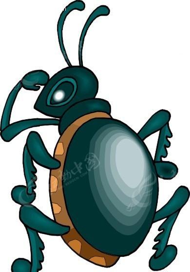 手绘背部耍酷的甲虫