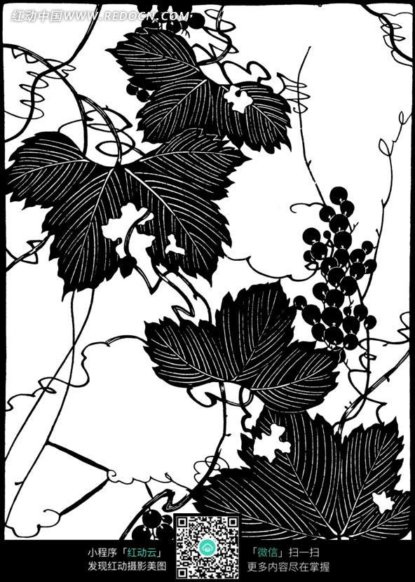 手绘古典葡萄藤蔓叶子图片