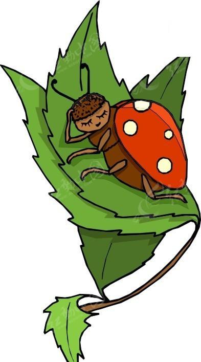 手绘躺在树叶上睡觉的瓢虫