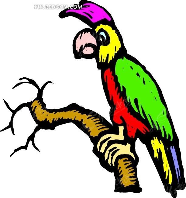 鸟 鹦鹉 卡通动物 卡通画 插画 手绘 矢量素材 动物图片 卡通形象