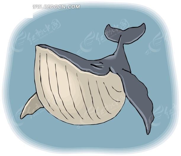 水中的蓝鲸手绘素材