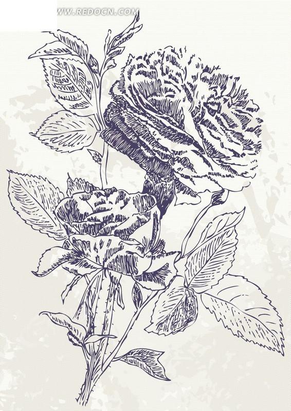 素描 玫瑰花 精美图案 精美底纹 手绘 插画  底纹 背景素材 矢量素材