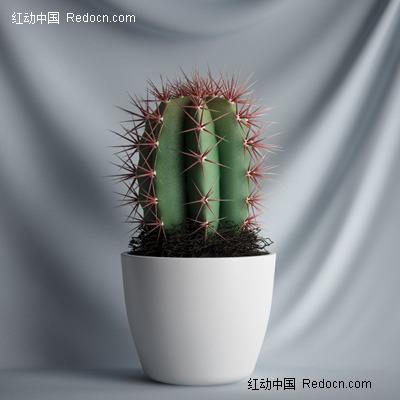 3d盆栽仙人球植物模型图片