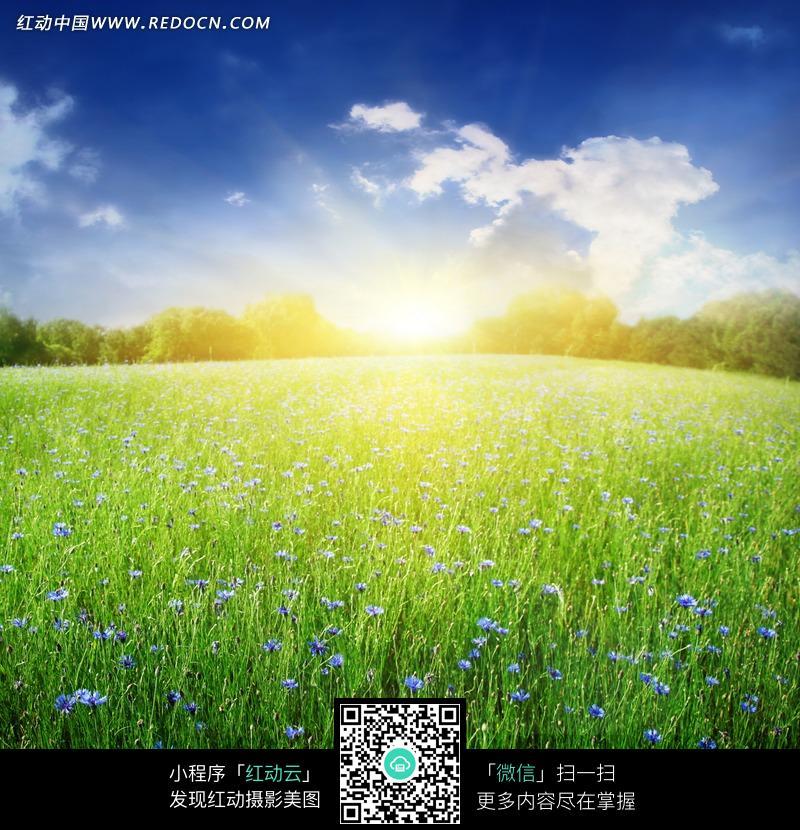 免费素材 图片素材 自然风光 自然风景 阳光下的草原风景图片图片