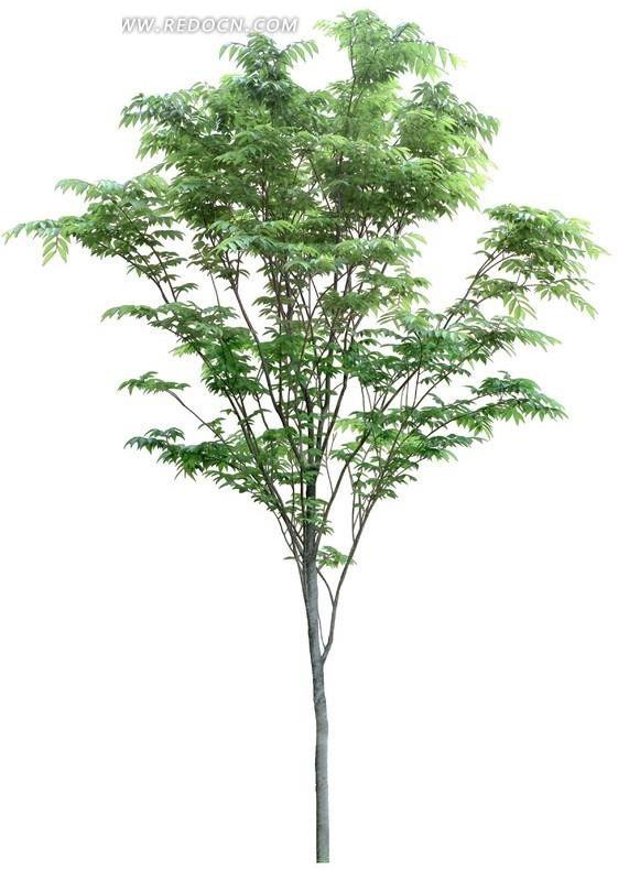 带有绿色叶子的树苗透明png格式图片