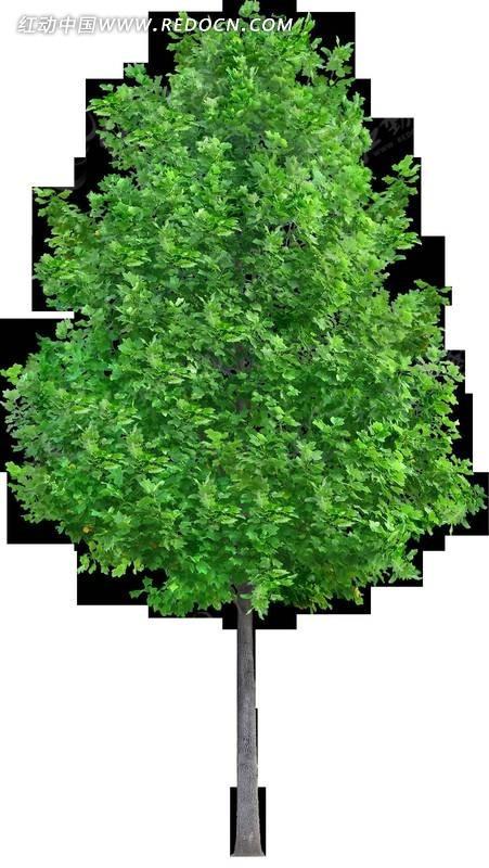 一棵美丽的桃树透明png格式_植物_红动手机版