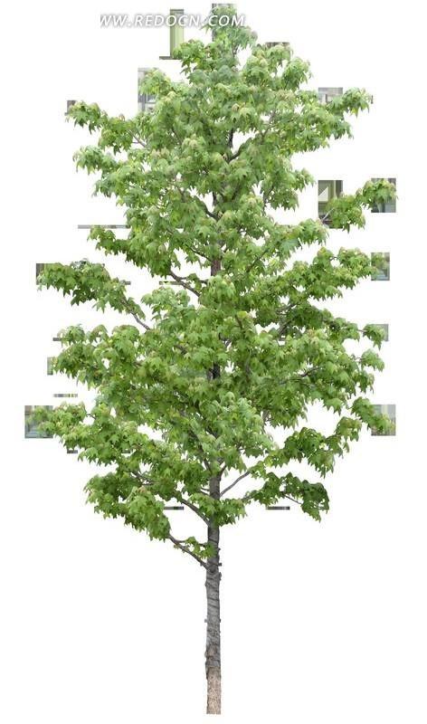 园林绿叶树木透明png格式