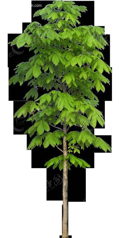大树的结构分解图