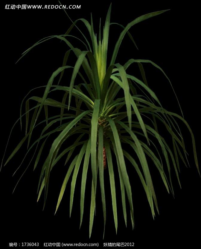 长细叶绿色植物