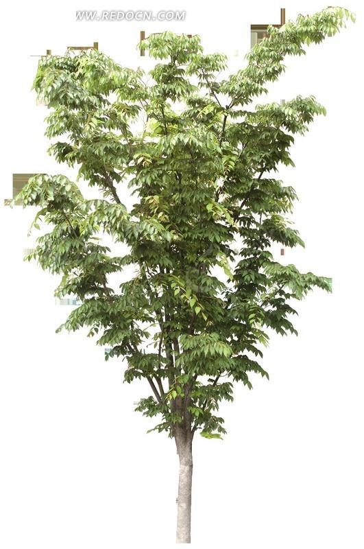 绿叶小树木透明png格式