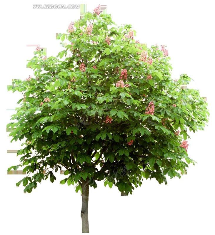 孕妇梦见绿色植物茂盛