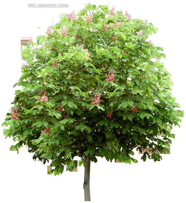 素材绿树园林特点树叶园林绿化园林景观建设环保园林树木png绿树商业设计图片