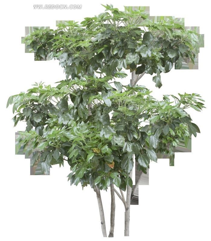 壁纸 盆景 盆栽 树 植物 699_830