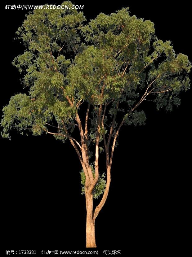 树木鸟瞰图图片