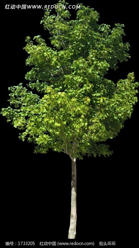 绿树 绿叶 树苗 绿化 鸟瞰图 景观植物 园林植物 摄影图片 jpg 植物