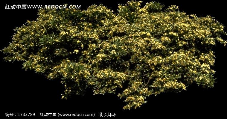 茂盛树木鸟瞰图