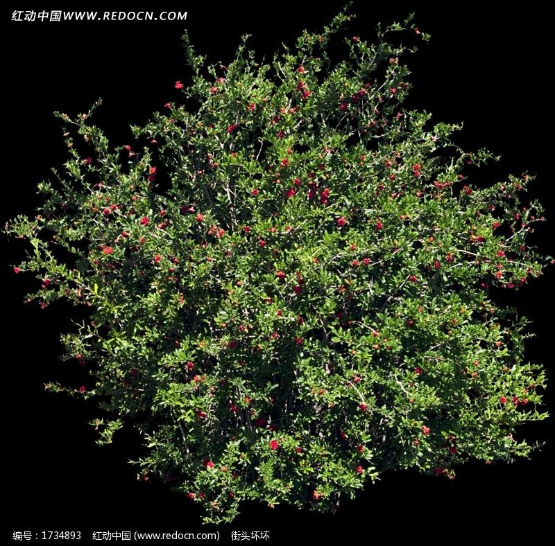 红色小花朵树木鸟瞰图图片